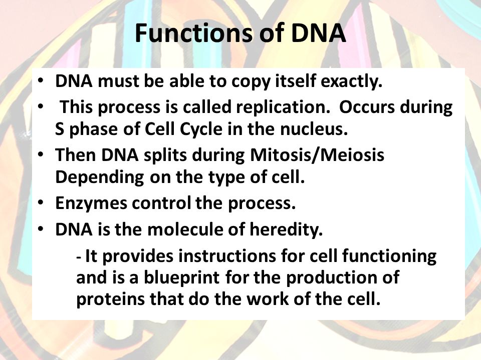 Functions of DNA DNA must be able to copy itself exactly.