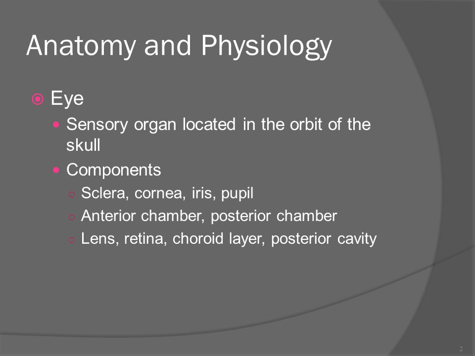 Anatomy and Physiology  Eye Sensory organ located in the orbit of ...