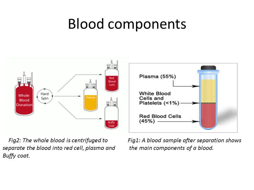 Blood components Fig1: A blood sample after separation shows the main components of a blood.