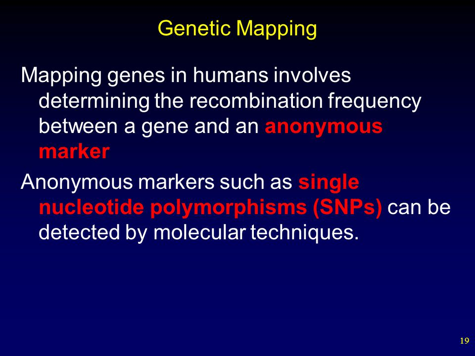 19 Genetic Mapping Mapping genes in humans involves determining the recombination frequency between a gene and an anonymous marker Anonymous markers such as single nucleotide polymorphisms (SNPs) can be detected by molecular techniques.
