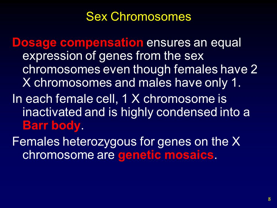 8 Sex Chromosomes Dosage compensation ensures an equal expression of genes from the sex chromosomes even though females have 2 X chromosomes and males have only 1.
