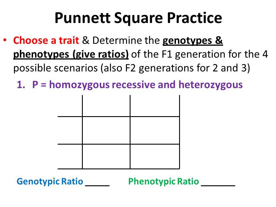 Pictures Genotype Phenotype Worksheet - Getadating