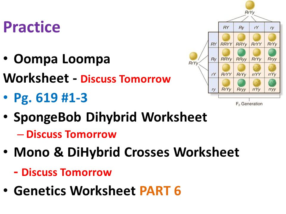 monohybrid cross worksheet answers Khafre – Oompa Loompa Genetics Worksheet Answer Key