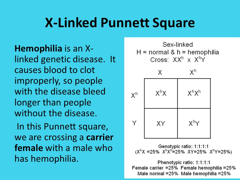 Do Now Answer the questions below in your notebookbinder – Sex Linked Punnett Square Worksheet
