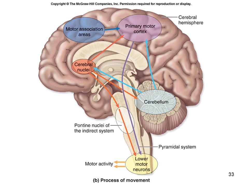 Outstanding Mckinley O Loughlin Human Anatomy Frieze - Anatomy And ...