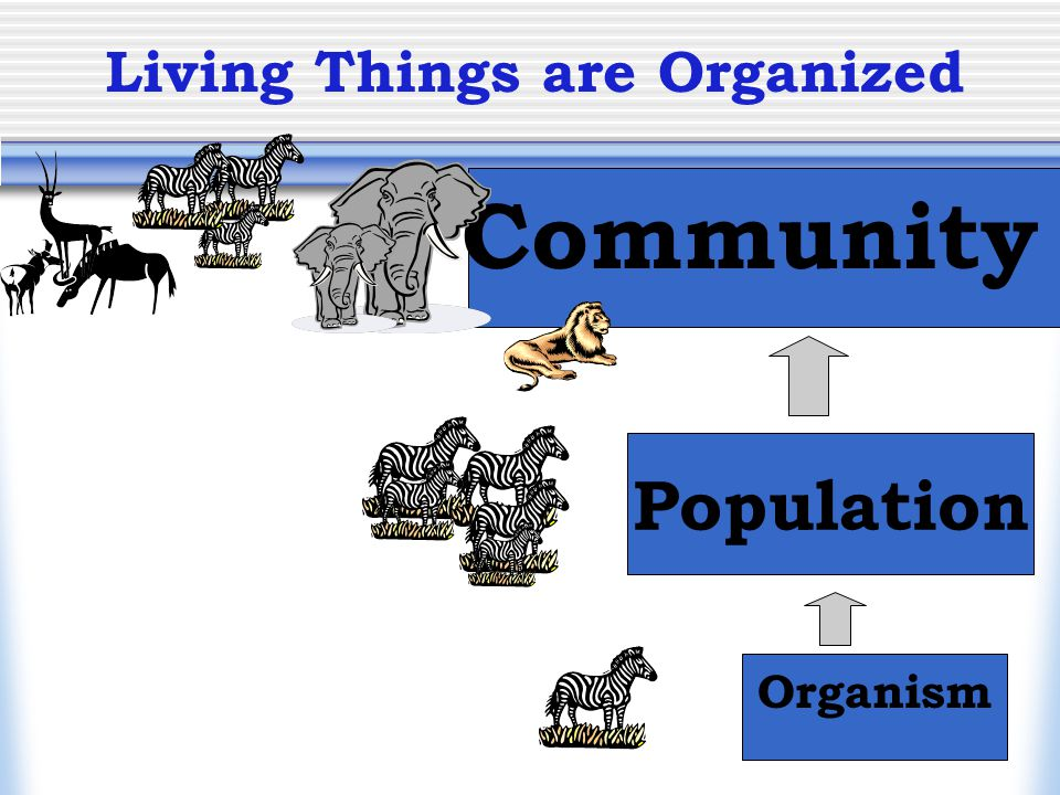 Living Things are Organized Organism Population Community
