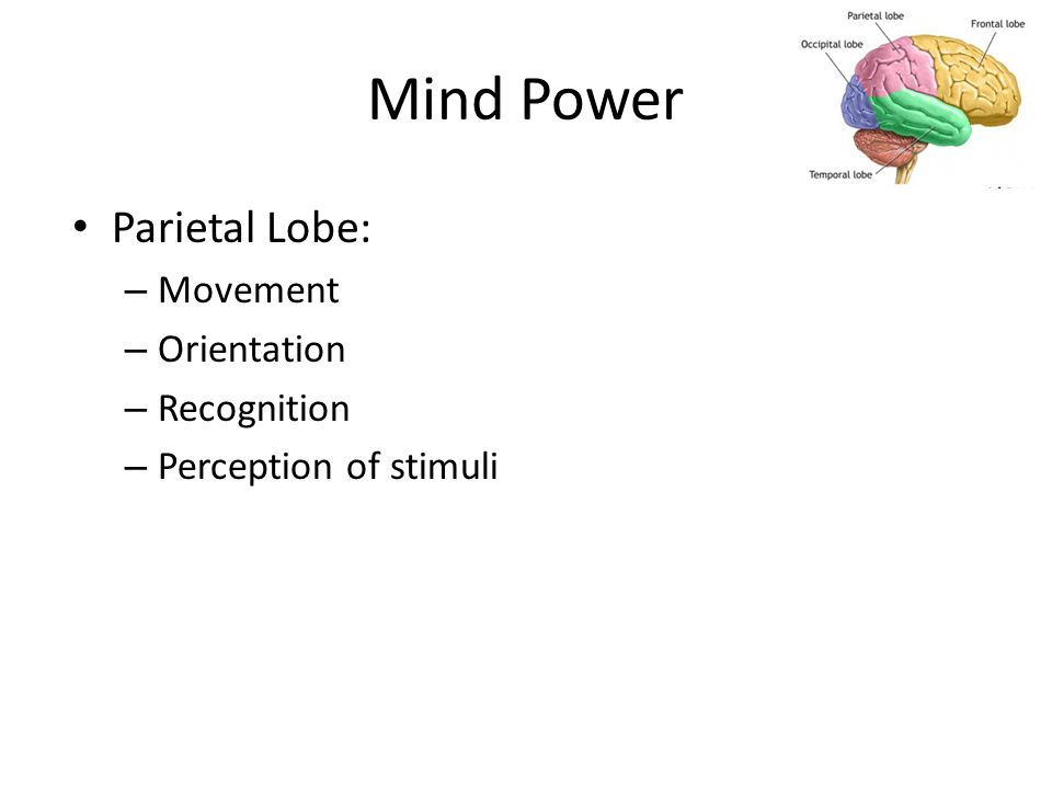 Mind Power Parietal Lobe: – Movement – Orientation – Recognition – Perception of stimuli