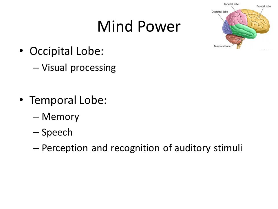 Mind Power Occipital Lobe: – Visual processing Temporal Lobe: – Memory – Speech – Perception and recognition of auditory stimuli