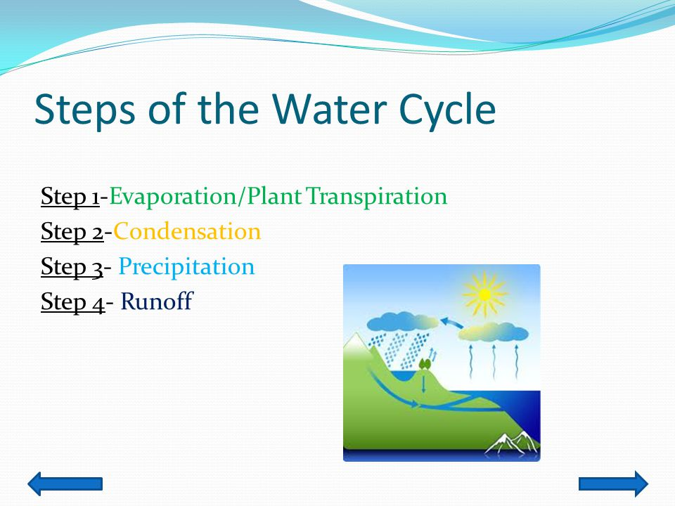 Jessica putman content area science grade level 4 th summary 4 steps of the water cycle step 1 evaporationplant transpiration step 2 condensation step 3 precipitation step 4 runoff ccuart Choice Image