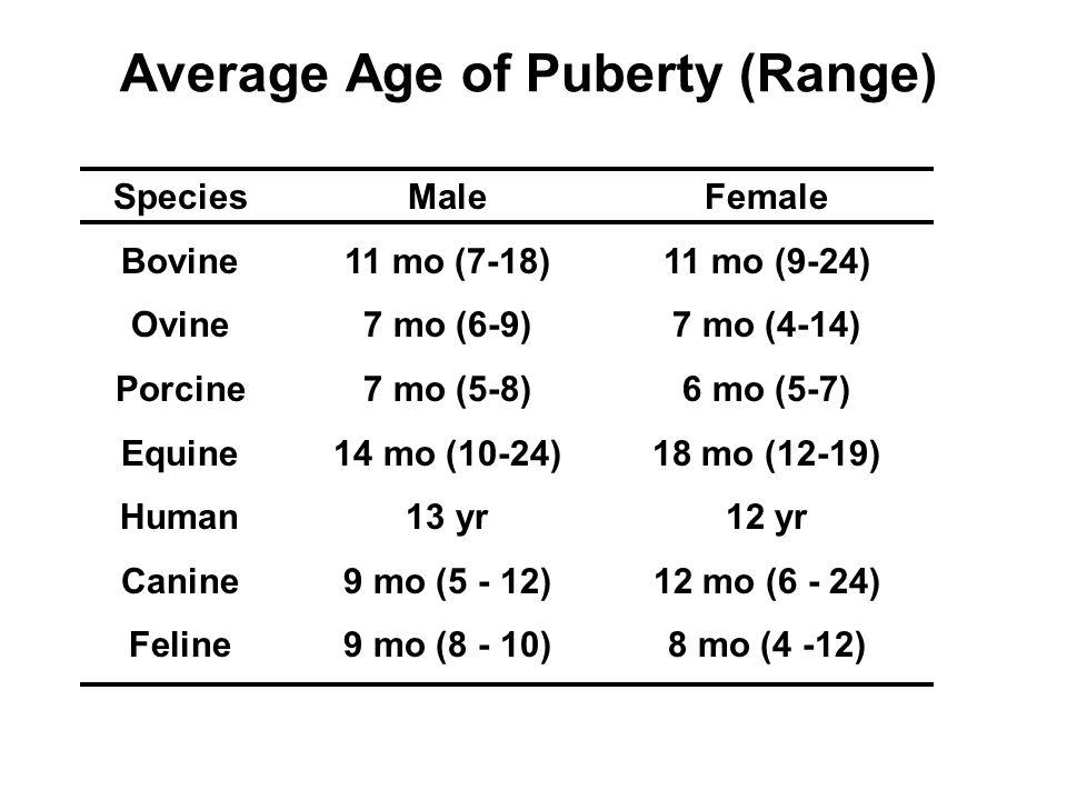 female puberty age