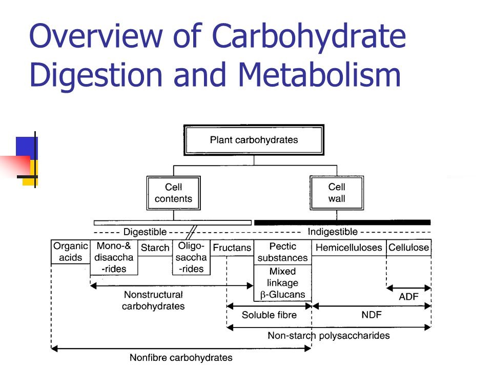 How does the body metabolise the products of digestion??