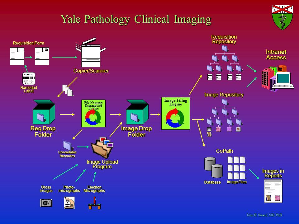 John H  Sinard, MD, PhD Department of Pathology Yale