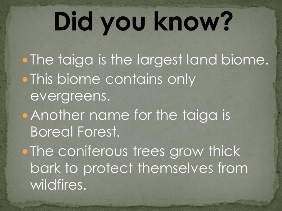 The taiga is the largest land biome. This biome contains only evergreens.