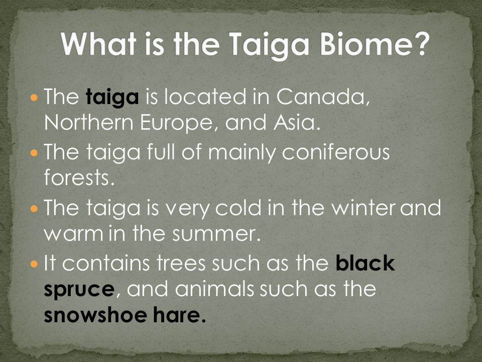 The taiga is located in Canada, Northern Europe, and Asia.
