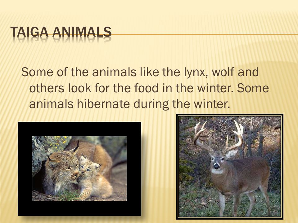  The animals that hibernate have long fur so they stay warm till spring.