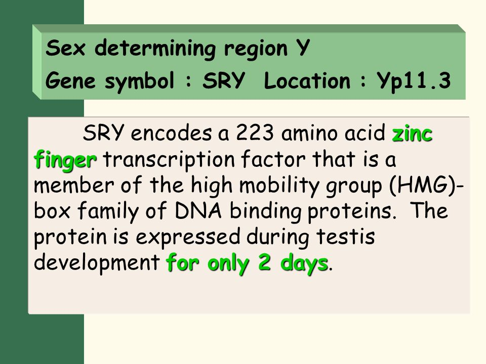 SRY, the master switch for male development in early embryogenesis.