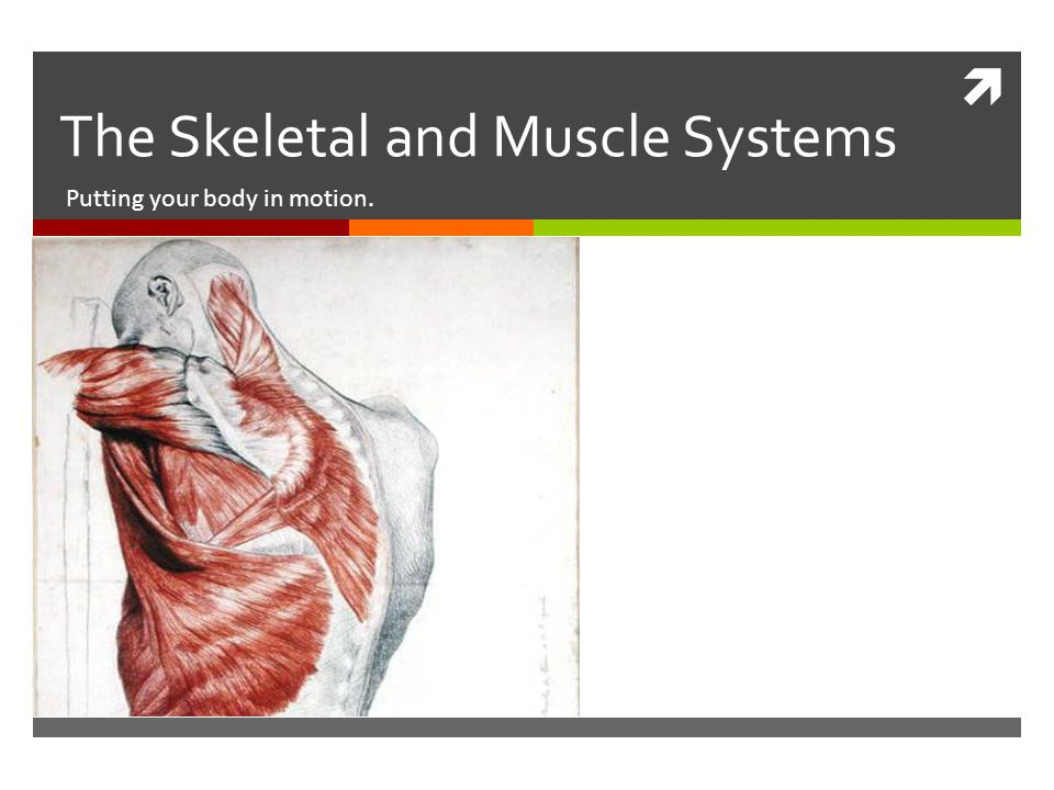 The Skeletal And Muscle Systems Putting Your Body In Motion Ppt