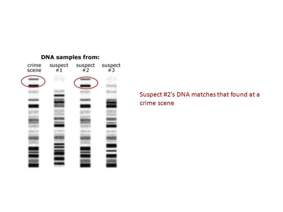 Suspect #2's DNA matches that found at a crime scene