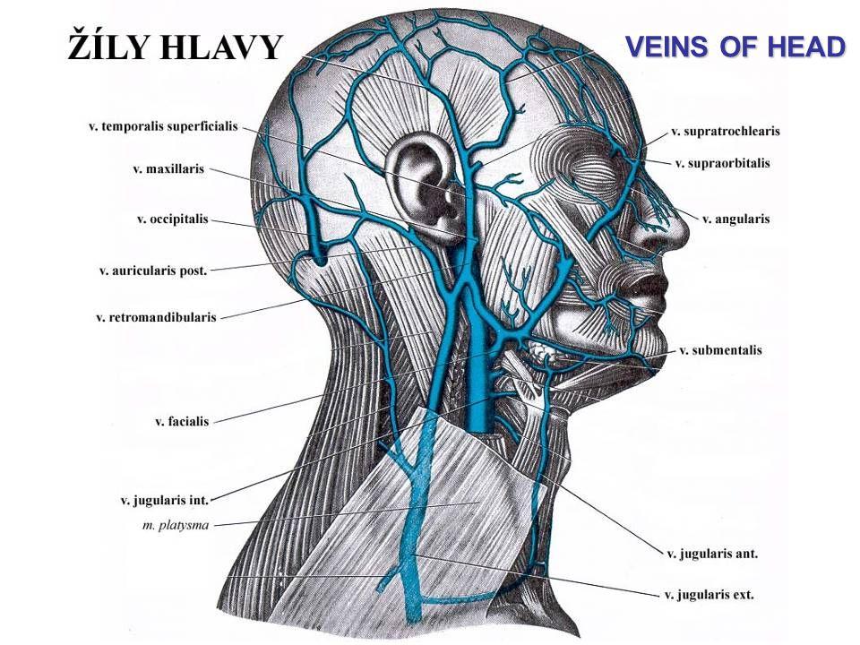 Vena auricularis posterior || Med-koM