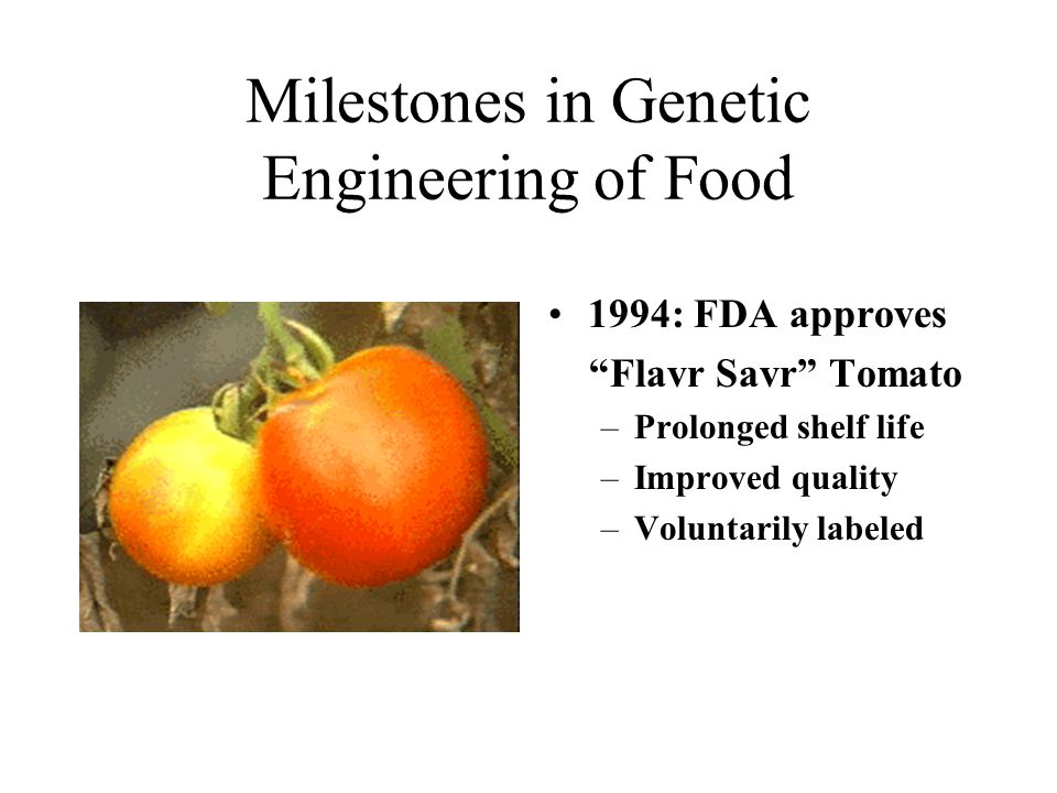 Milestones in Genetic Engineering of Food 1994: FDA approves Flavr Savr Tomato –Prolonged shelf life –Improved quality –Voluntarily labeled