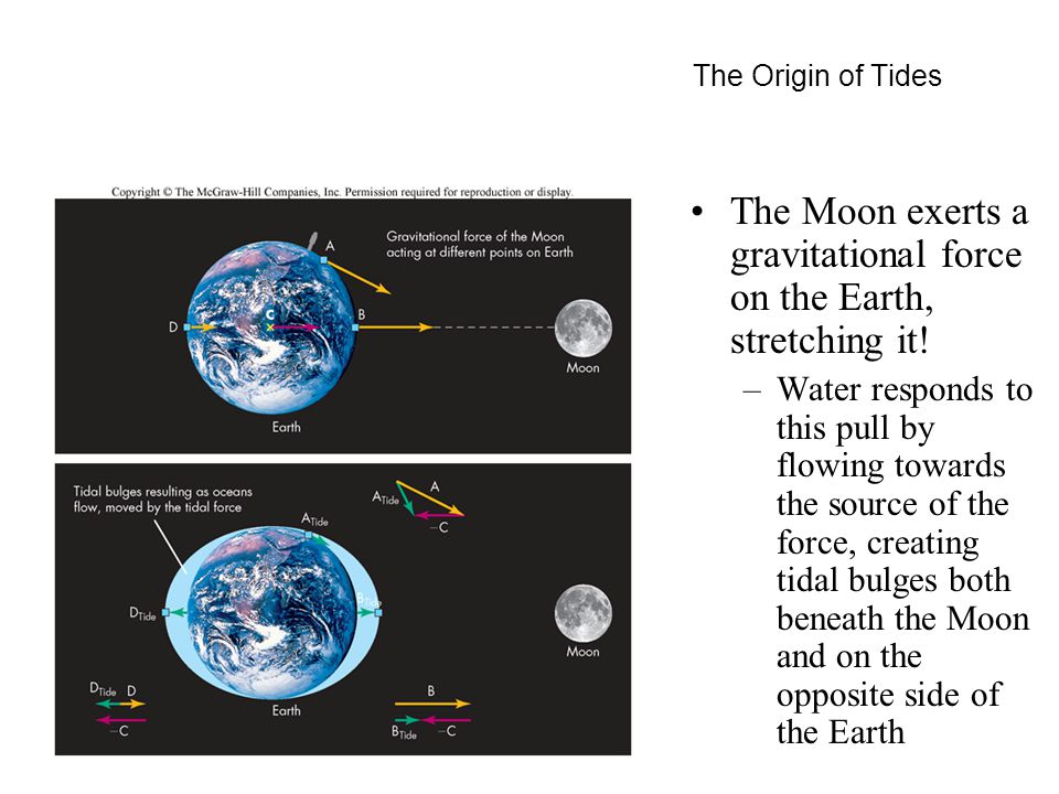 The Origin of Tides The Moon exerts a gravitational force on the Earth, stretching it.