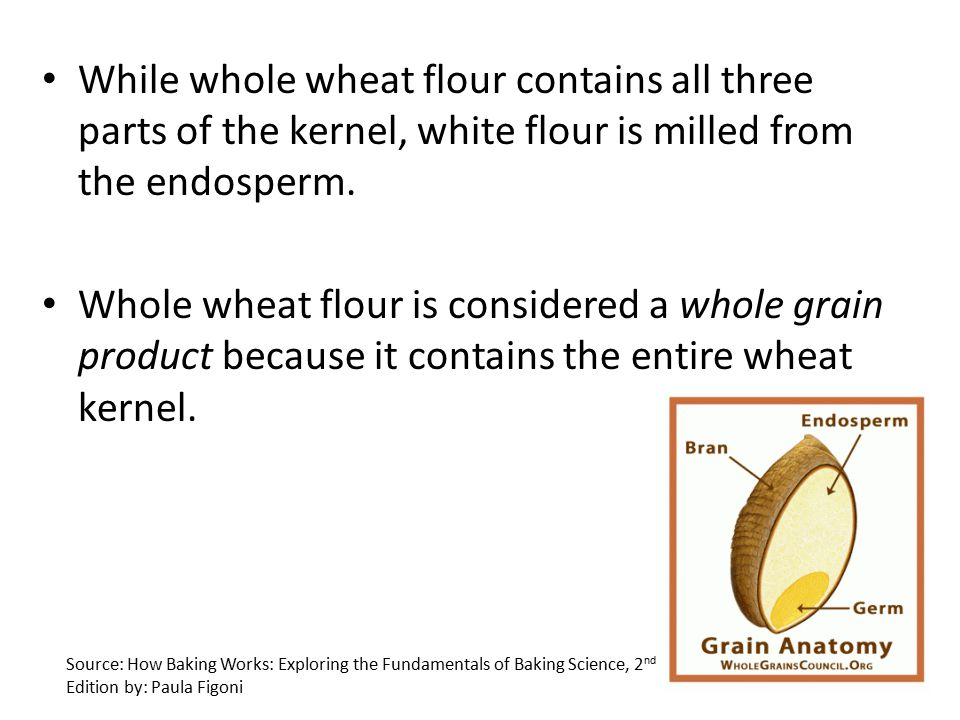Fine Anatomy Of Grain Component - Anatomy Ideas - yunoki.info
