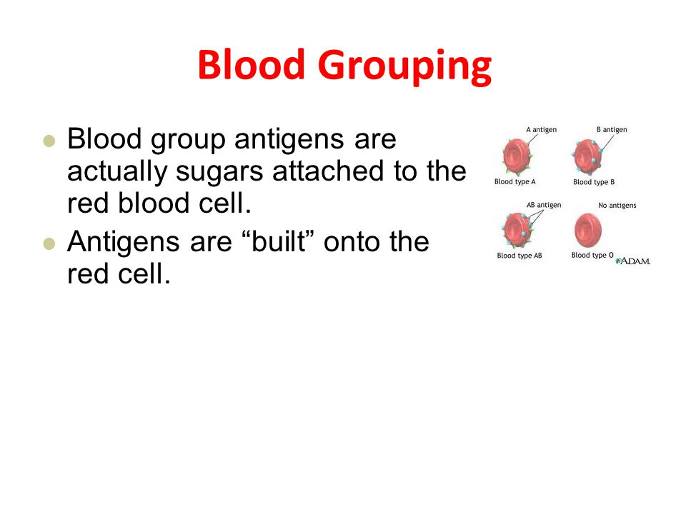 Blood Grouping Blood group antigens are actually sugars attached to the red blood cell.