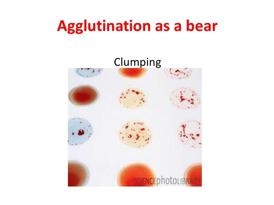 Agglutination as a bear Clumping