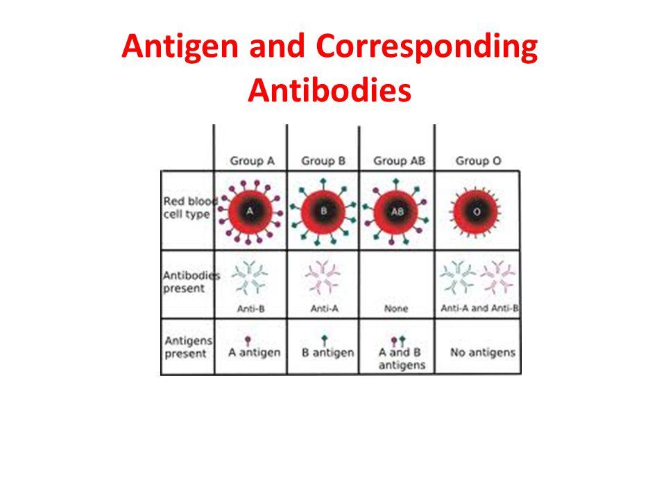 Antigen and Corresponding Antibodies
