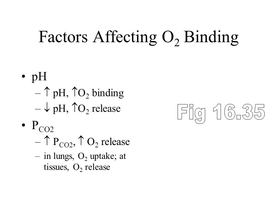 Factors Affecting O 2 Binding pH –  pH,  O 2 binding –  pH,  O 2 release P CO2 –  P CO2,  O 2 release –in lungs, O 2 uptake; at tissues, O 2 release