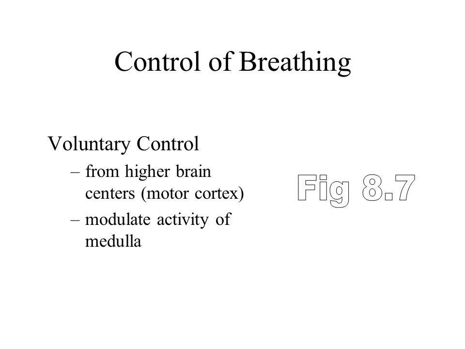 Control of Breathing Voluntary Control –from higher brain centers (motor cortex) –modulate activity of medulla