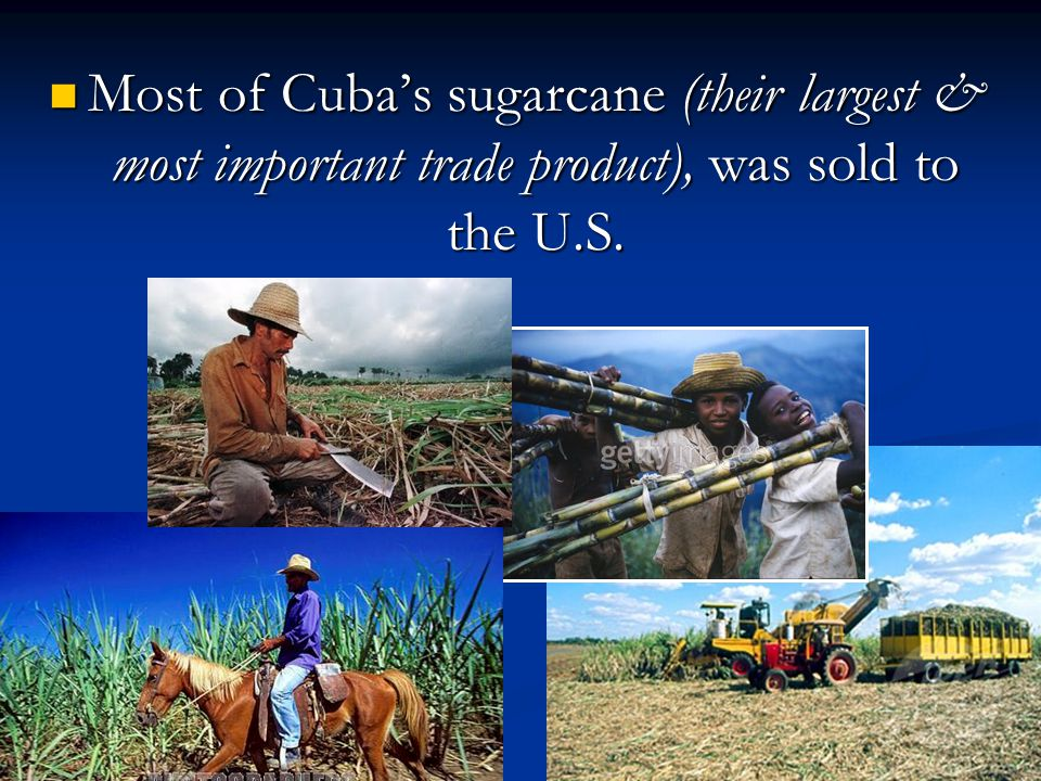 Most of Cuba's sugarcane (their largest & most important trade product), was sold to the U.S.