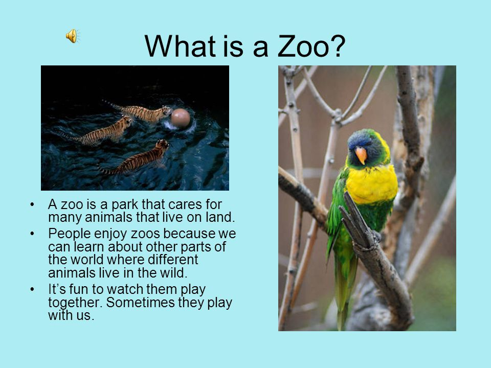 Paramahansa com   A visit to zoo  An essay by Priyanka A  VIth                 Urdu  English Meaning Tips  How To  Method  Hindi     essay animals in zoos
