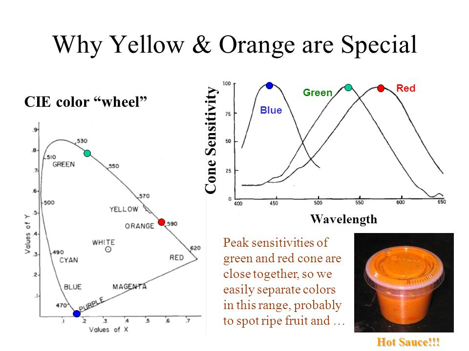 Physics Of Color Spectrum Visible Light Wavelengths Photons