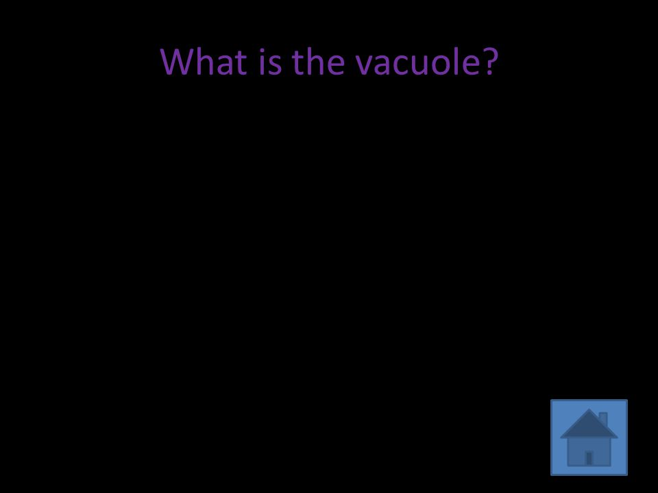 What is the vacuole