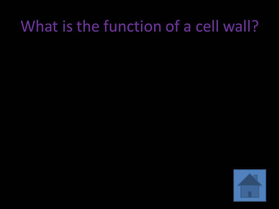 What is the function of a cell wall