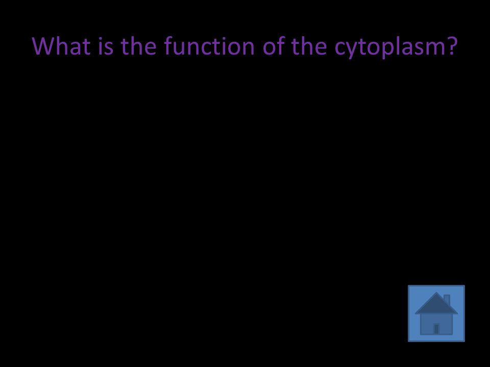 What is the function of the cytoplasm