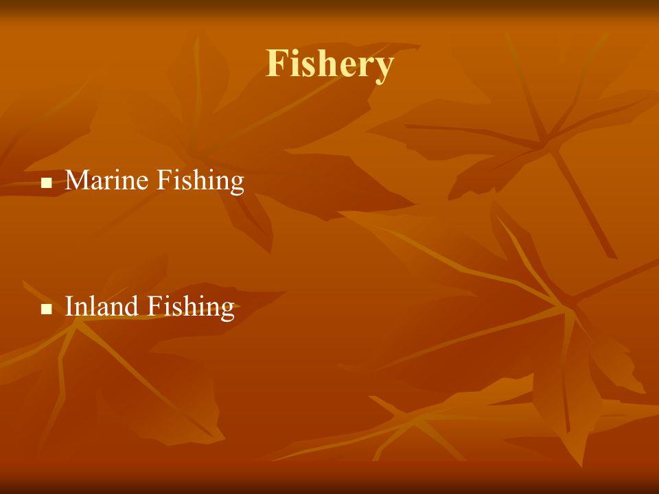Fishery Marine Fishing Inland Fishing