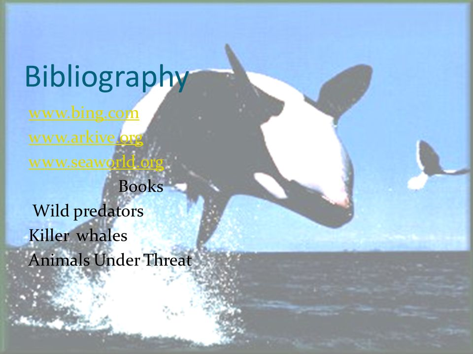 Interesting Facts The orca grows up to 50 to 100 years.