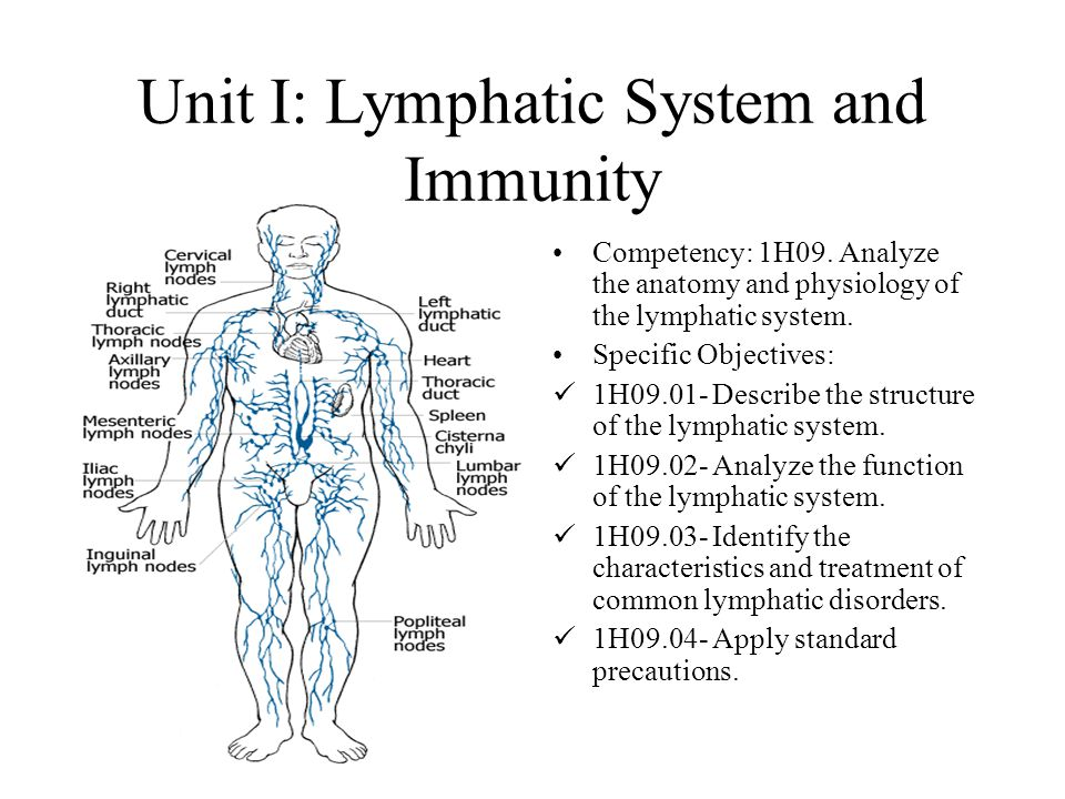 Anatomy Multiple Choice Questions Lymphatic System PDF 703949 ...