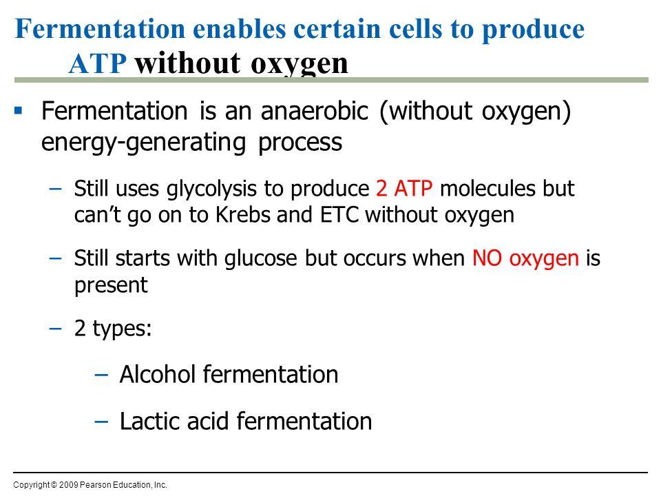 Pyruvate is a branching point Pyruvate O2O2 O2O2 mitochondria Kreb's cycle aerobic respiration fermentation anaerobic respiration