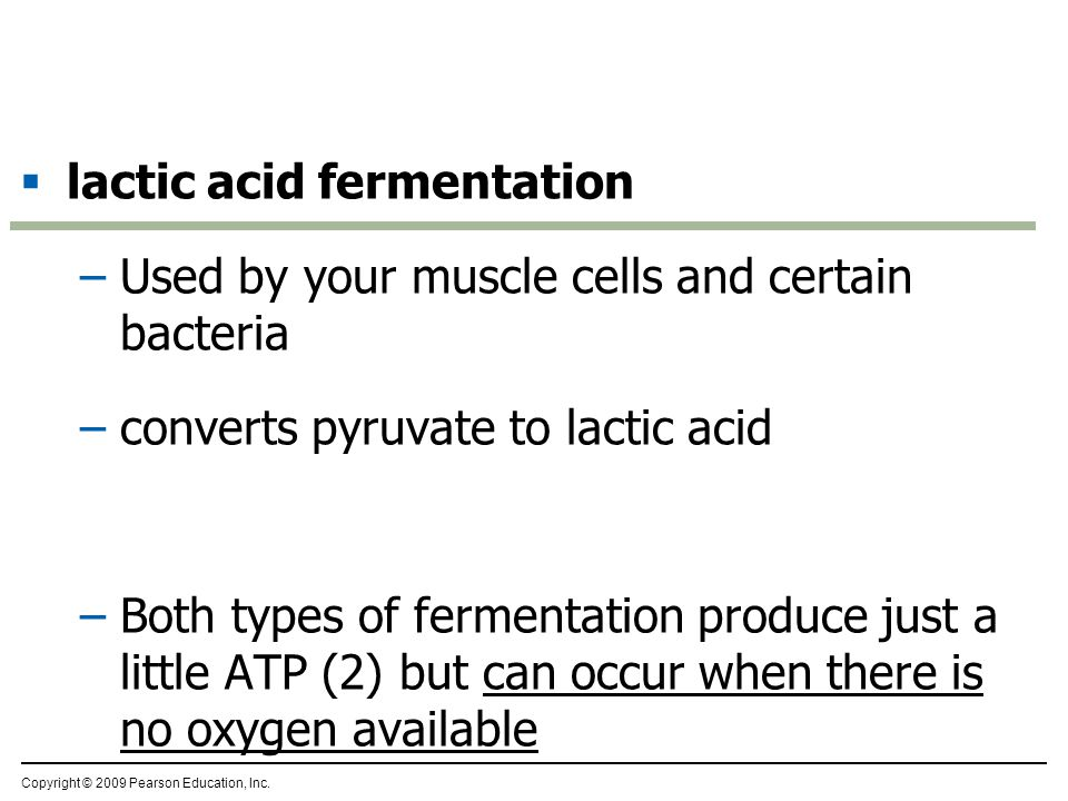  alcohol fermentation –Used by some bacteria and yeasts (single-celled fungi) –converts pyruvate to CO 2 and ethanol –Important in baking and winemaking industry Copyright © 2009 Pearson Education, Inc.