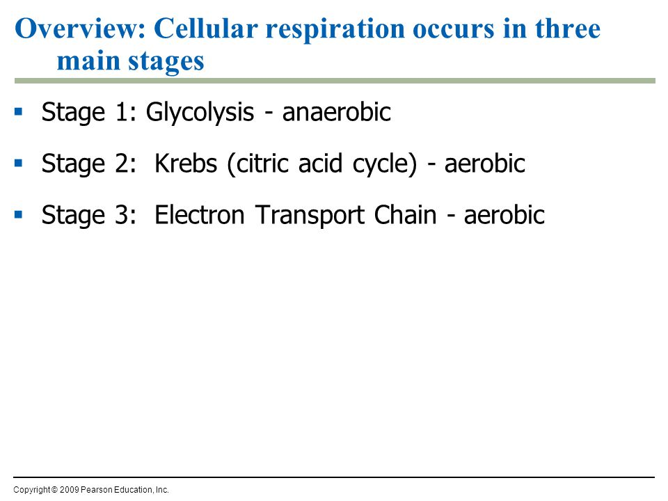 What is the overall purpose of cellular respiration.