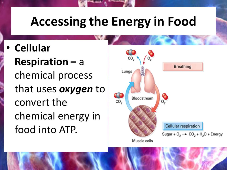 Accessing the Energy in Food Cellular Respiration – a chemical process that uses oxygen to convert the chemical energy in food into ATP.