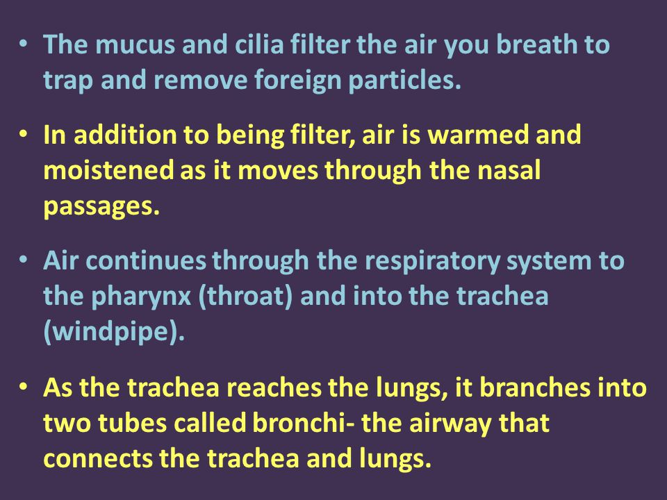 The mucus and cilia filter the air you breath to trap and remove foreign particles.