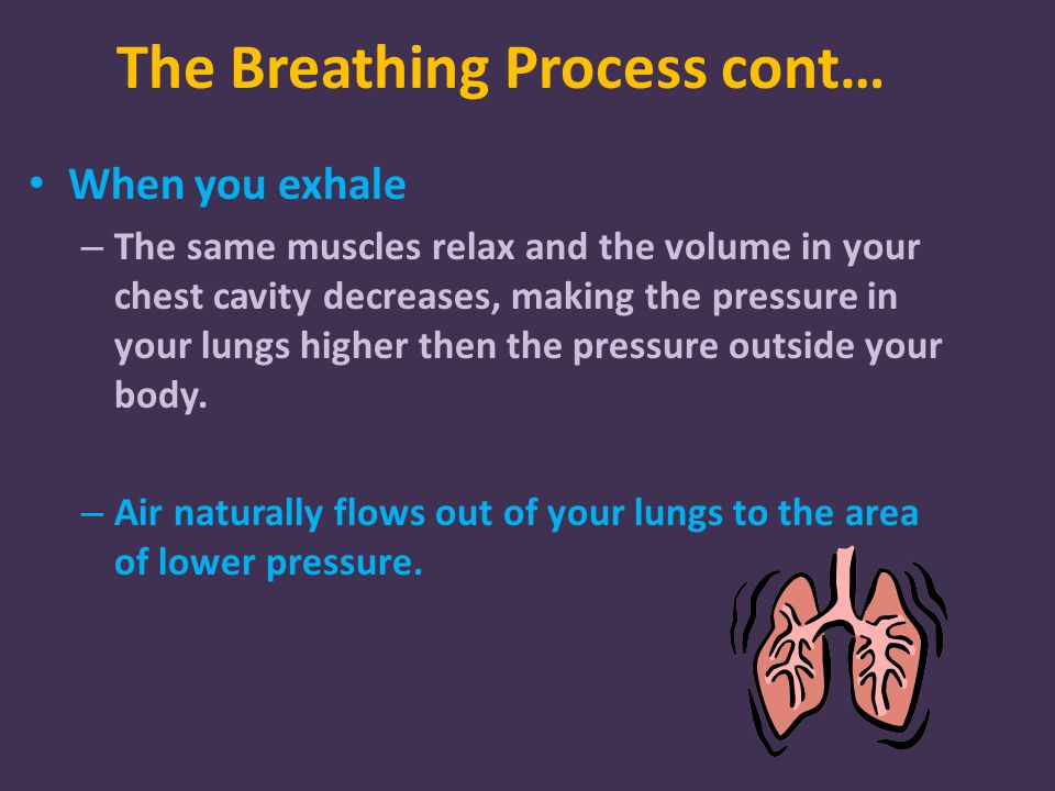 The Breathing Process cont… When you exhale – The same muscles relax and the volume in your chest cavity decreases, making the pressure in your lungs higher then the pressure outside your body.