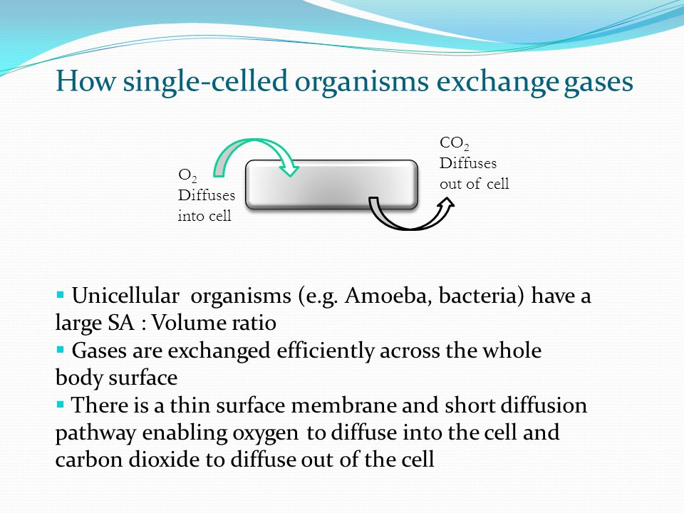 What are the advantages of a one celled organism?