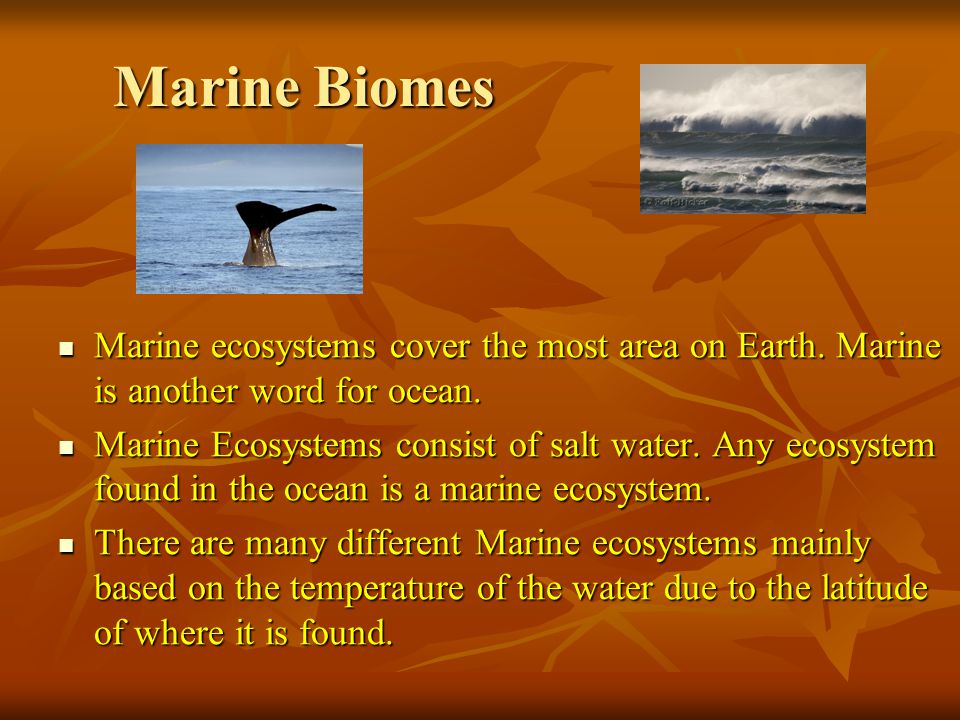 Marine Biomes Marine ecosystems cover the most area on Earth.