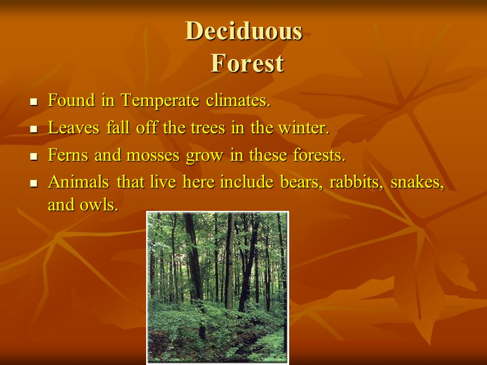 Deciduous Forest Found in Temperate climates. Found in Temperate climates.