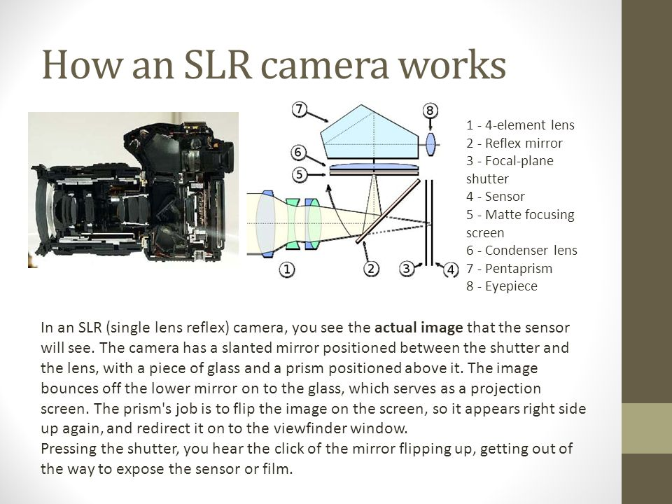 How an SLR camera works In an SLR (single lens reflex) camera, you see the actual image that the sensor will see.